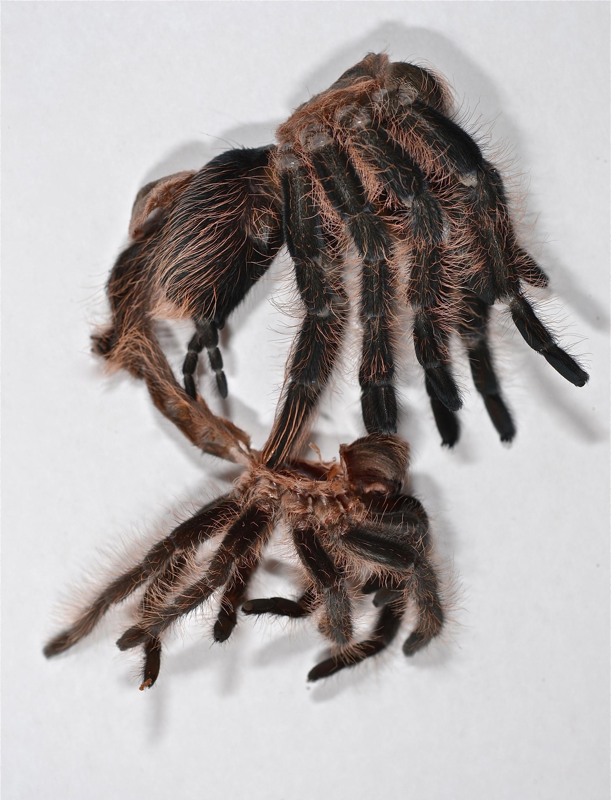 I hallucinated a tarantula writhing on top of my dresser