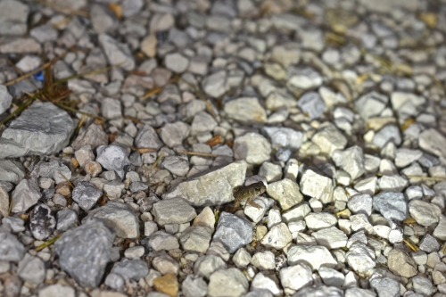 though the viewer doesn't see that the image was taken on tiy pieces of crushed limestone that makes up the top layer of many rural driveways and the shoulders of rural tar and chip roads.